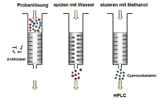 Grafik: schematische Darstellung der Immuno-Affinitätschromatographie.